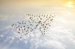 flock of birds team up to form an arrow